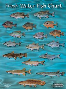 Fc02 Freshwater Fish Chart