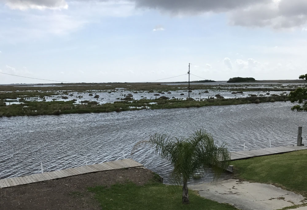 MARSH DAMAGE CAUSED BY MUSKRATS LATEST THREAT TO COASTAL EROSION
