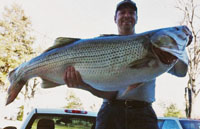 Rodney Ply with his record pending striper