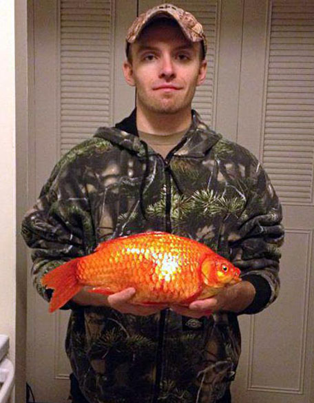 Giant Goldfish | Giant Goldfish Captured